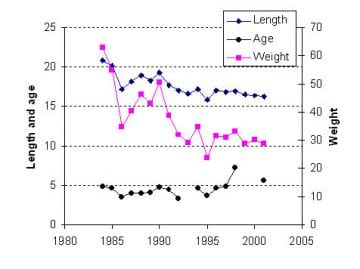 Mean length, weight and age of spawning herring population in the Archipelago Sea in 1984-2001.