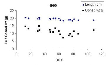 Mean length and gonad weight (black squares) of herring females spawning in different times during spring and summer 1990. DOY= day-of-the-year (running number from the 15th of April).