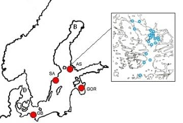 Major spawning areas of the herring in the southern, central and northern Baltic Sea. AS=Archipelago Sea; SA=Stockholm Archipelago; GOR=Gulf of Riga; GB= Greifswalder Bodden, B=Bothnian Bay. Map on the right: Airisto inlet in the Archipelago Sea; blue circles indicate monitored spawning beds.