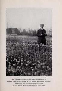 Catalogue of Dutch bulbs (Gruilemans, J.J. & Sons., 1912). Wikimedia Commons.