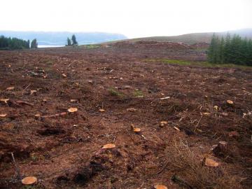 Ala hakattua metsää.