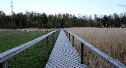 Puinen kävelysilta peltojen keskellä.