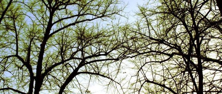Puut keväällä